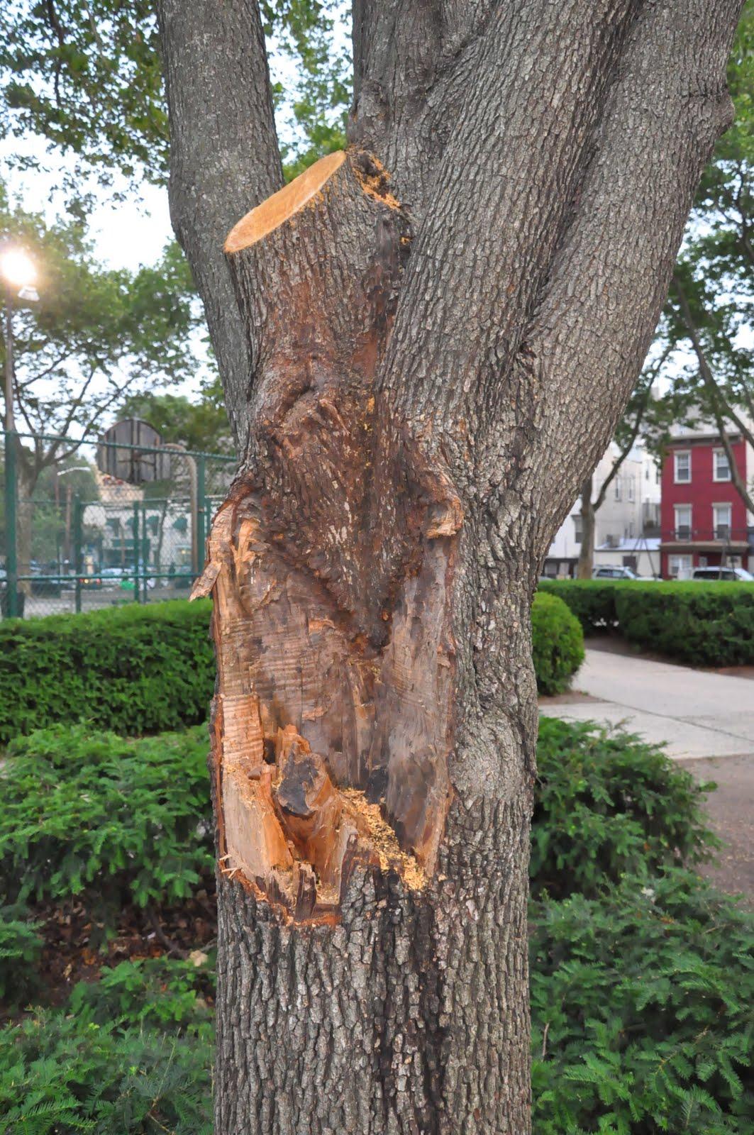 Tree Vigil Recap And Horticultural Lesson On Proper